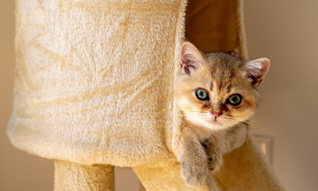 cat-tower-for-large-cats