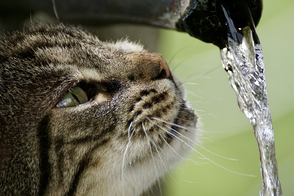How to prevent slime in pet water fountain