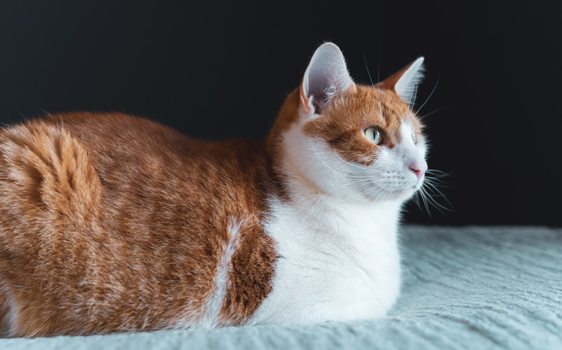 best low entry litter box for senior cats