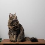 top entry litter box pros and cons