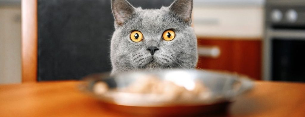 31 toxic foods for cats
