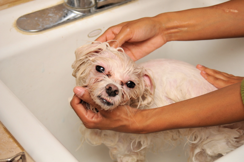Can you use baby shampoo on dogs