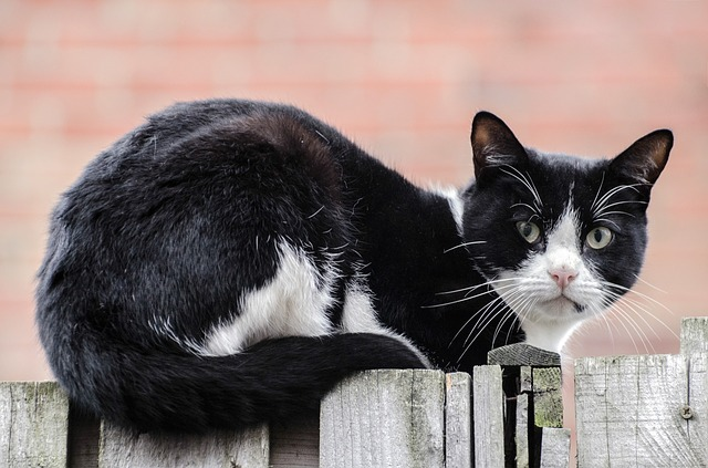 How to keep your cat in the yard?