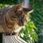 how to cat proof a balcony