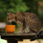 how long can cats go without food and water