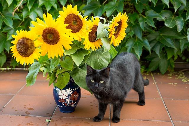 can cats eat sunflower seeds