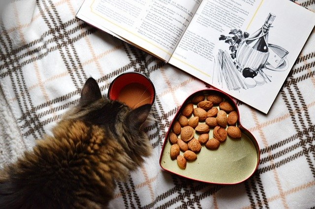 can cats eat dried fruit and nuts
