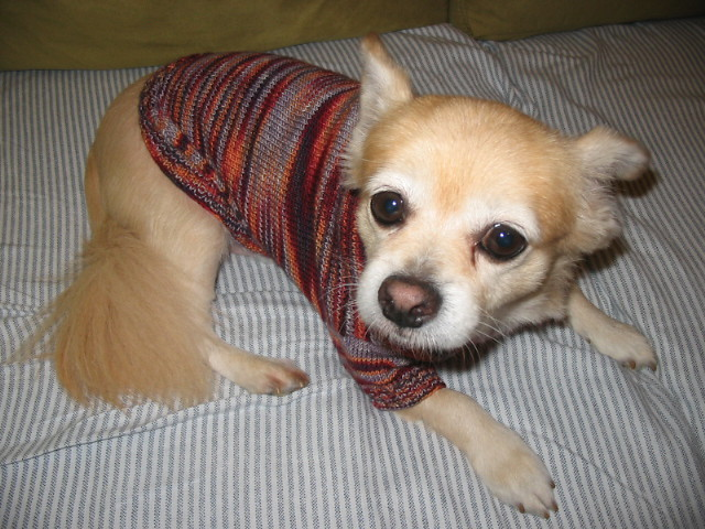 Do Chihuahuas get cold easy?