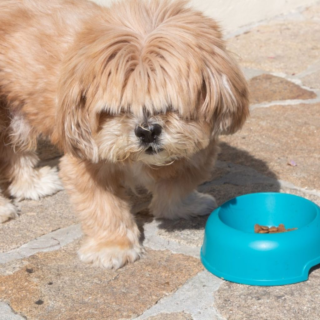 should-i-feed-my-dog-before-or-after-morning-walk