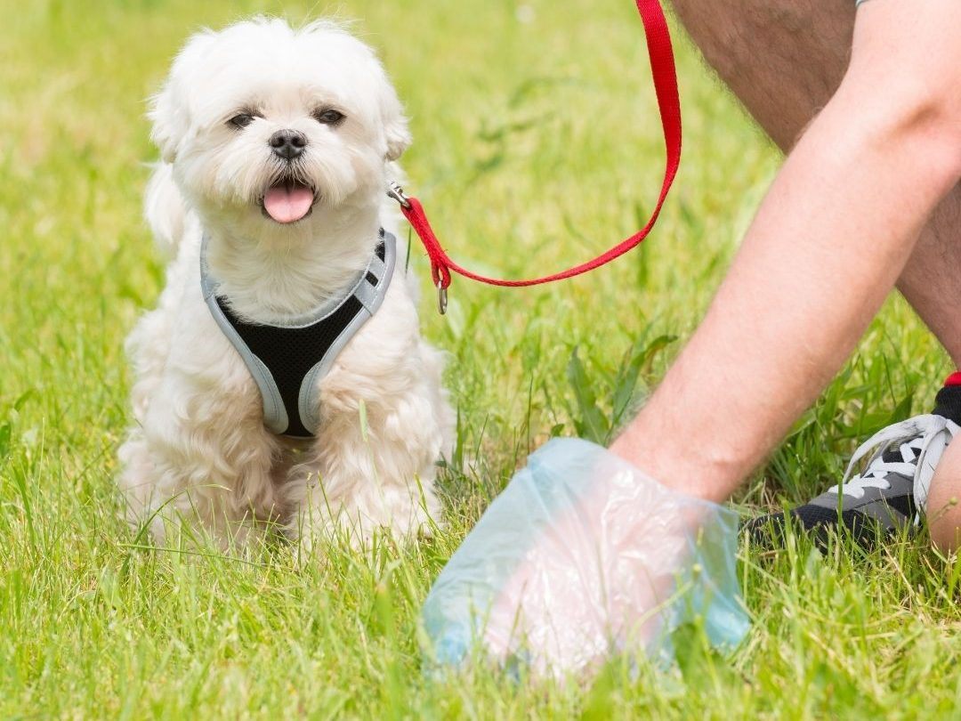 how-many-times-a-day-should-a-dog-poop