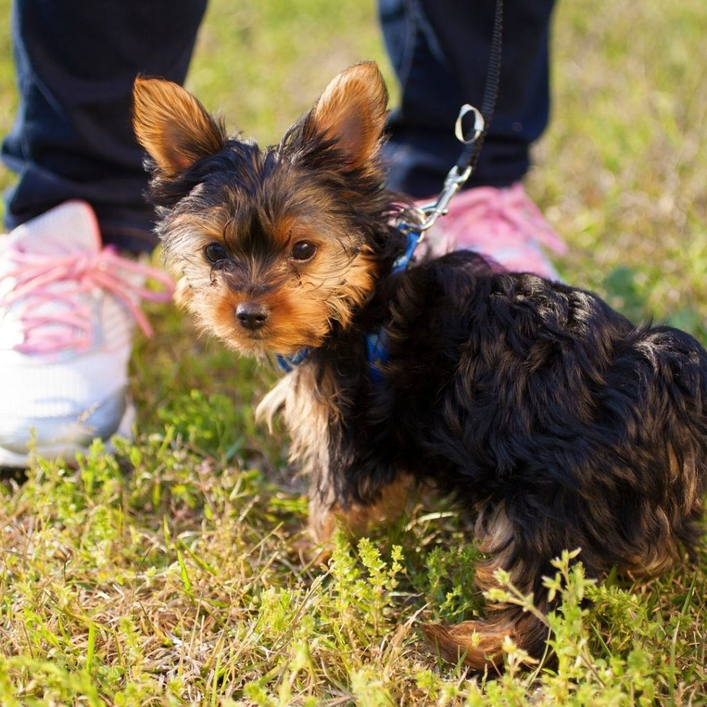 how-long-should-you-wait-to-walk-your-dog-after-they-eat