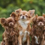 how-to-keep-dogs-from-pooping-in-your-yard
