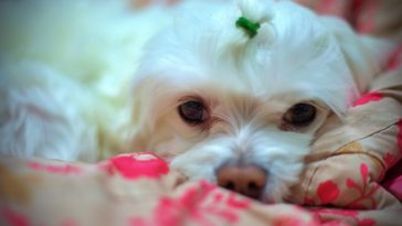 Do dogs know when humans are sleeping?