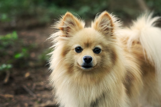 how to keep dogs from stinking?