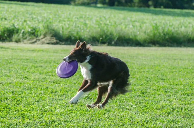 Why Do Dogs Run In Circles?