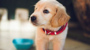 What Does It Mean When A Puppy's Stomach Is Hot?
